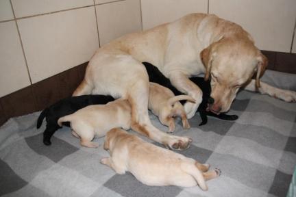 Puppies 1 week
