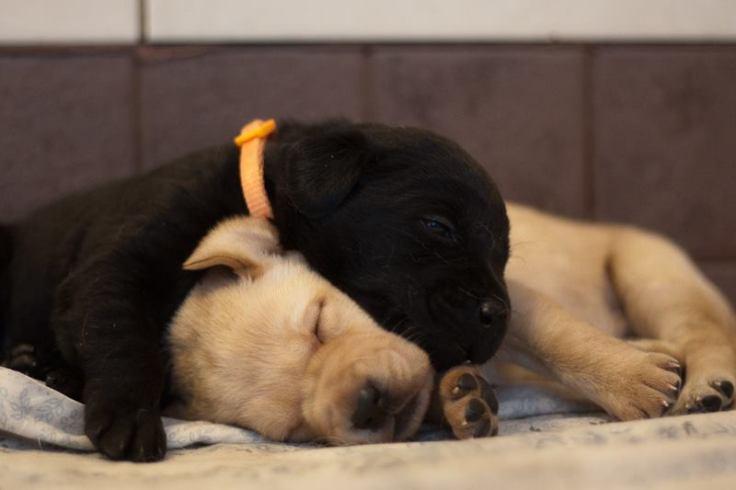 3-week-old-pups